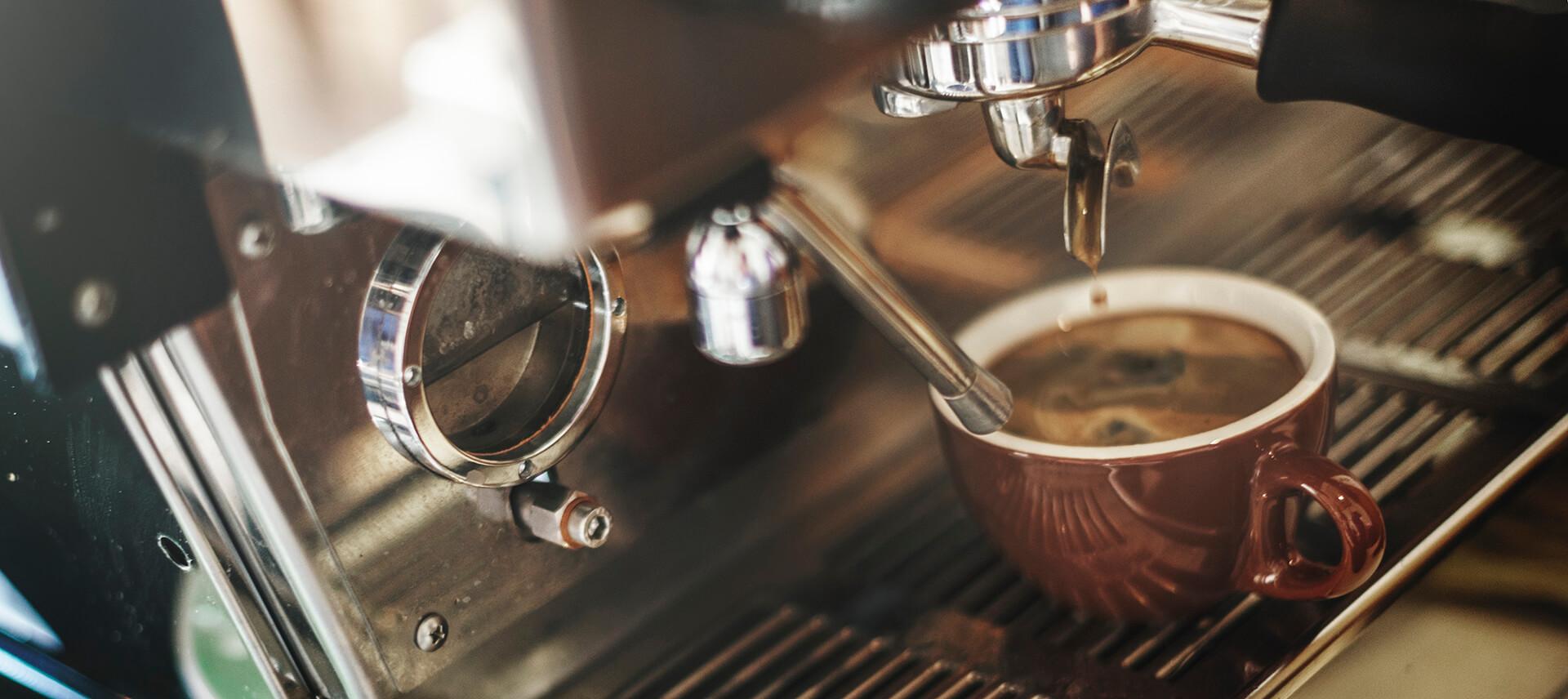 Grab a Coffee at A Brisbane Dog Friendly Cafe